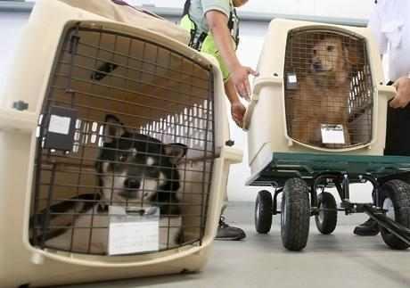 Перевозка животных через границу