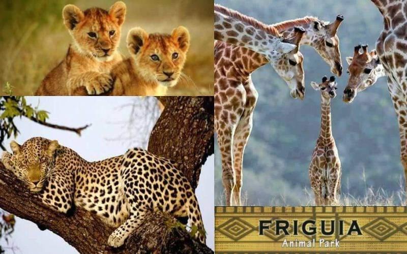 зоопарк фригия тунис