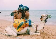 Что шокирует в Тунисе