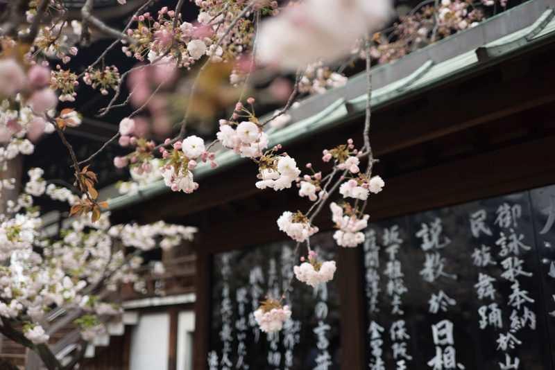 К гейшам не идём: на чём экономить в Японии