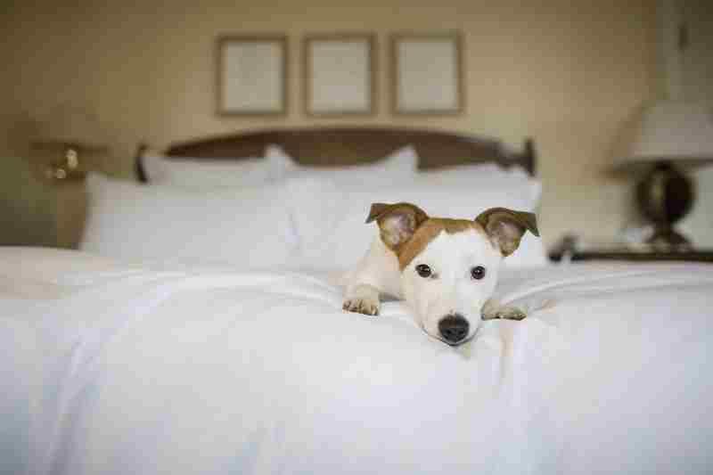 Отпуск с собакой: выбираем размещение