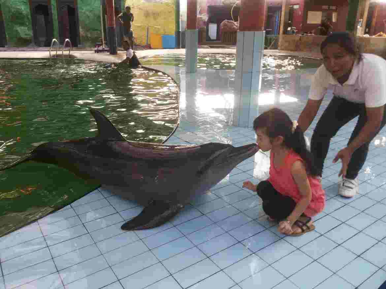 Удивительный дельфинарий