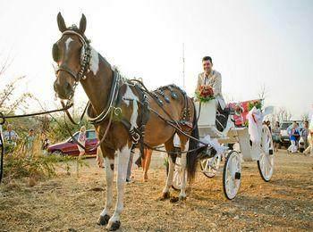 Королевский выезд - упряжка для свадебной церемонии