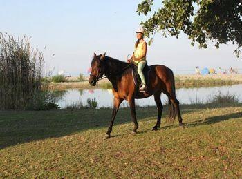 Экскурсии на лошадях
