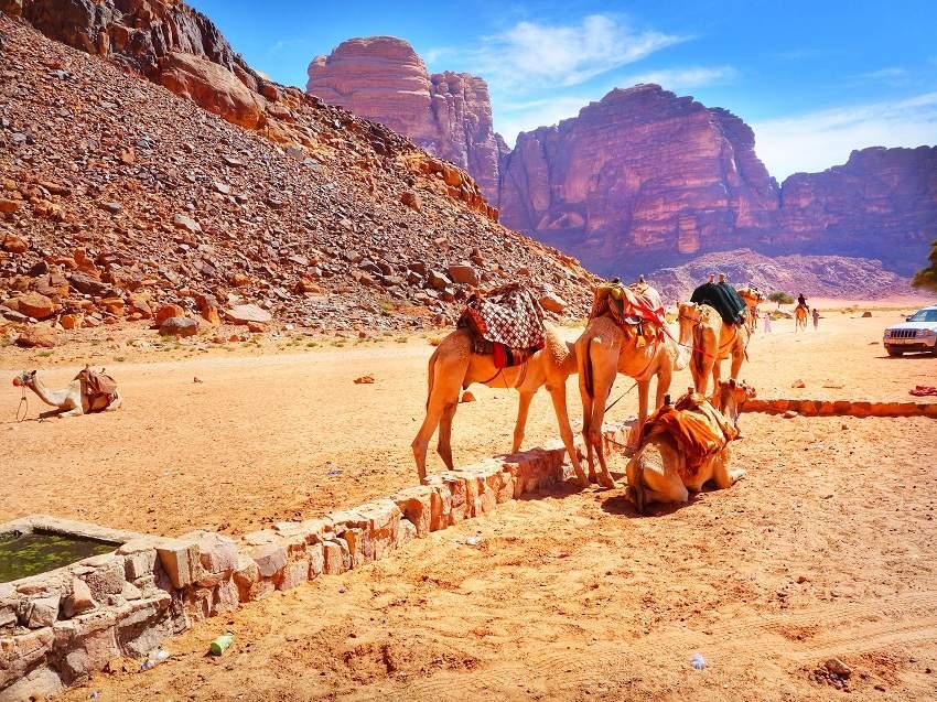 в вади рам на верблюдах