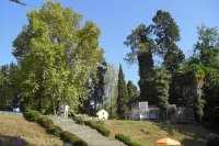 Обезьяний питомник в Сухуми