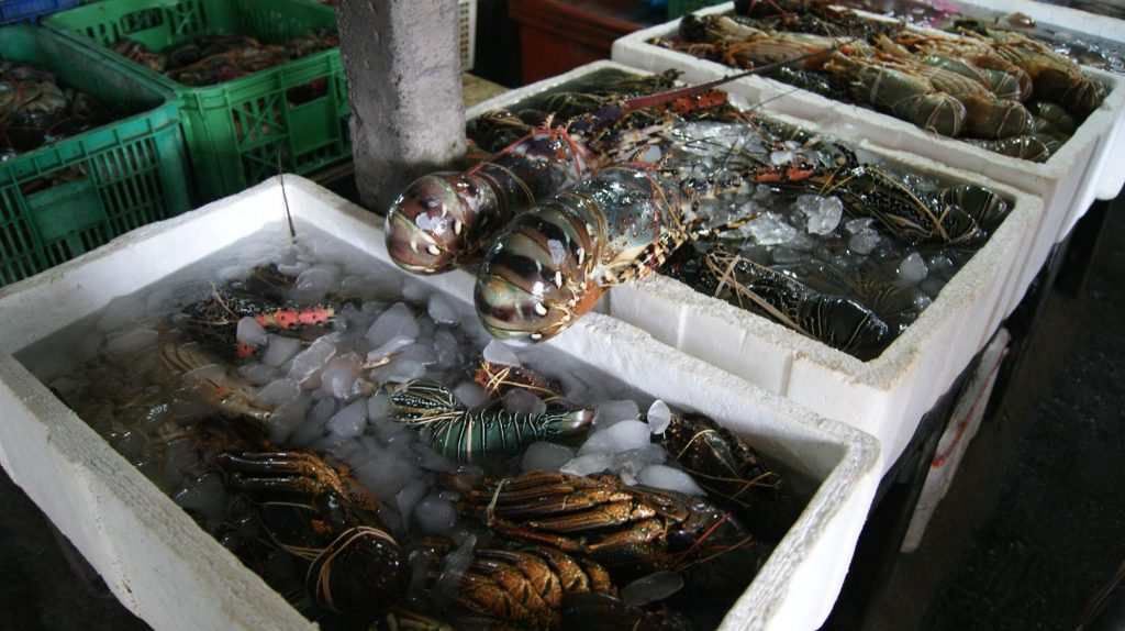 Свежие морепродукты из Джимбаран