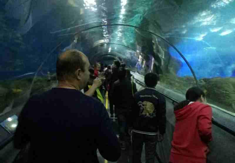 Далянь океанариум тоннель