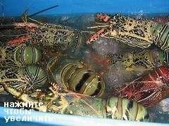 Цены на Бали на еду в ресторанах, Живые морепродукты